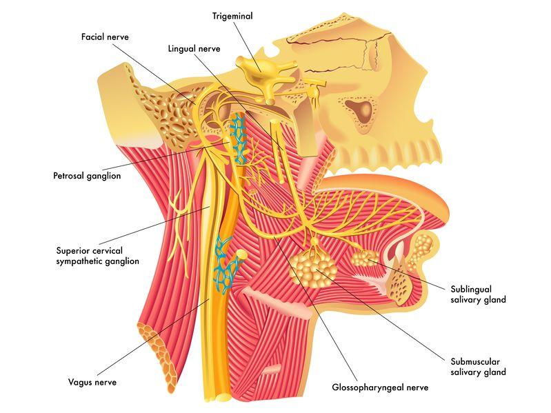 女性に多い気象病による頭痛とその対策