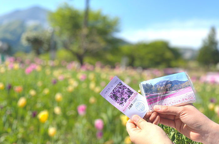 園内にはまだ色とりどりのチューリップが咲いていました