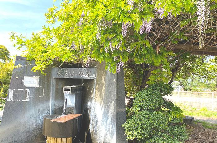 藤の花が香る給水スポット