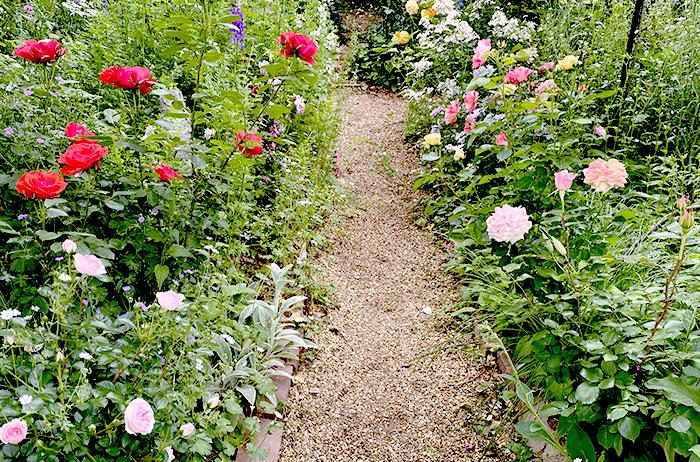 雨の日のバラは香りが一層強く感じられます