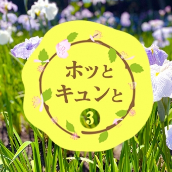 【#3 ホッとキュンと】花菖蒲・あじさい